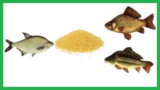 Кукурузная каша для ловли рыбы на пружину