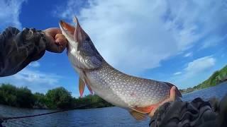 Рыбалка на реке тобол в курганской области