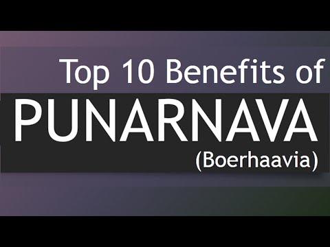 Video Top 10 Health Benefits of Punarnava - Medicinal Plants Boerhavia / Punarnava