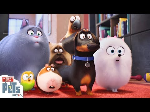 The Secret Life of Pets Animation Movies For Kids