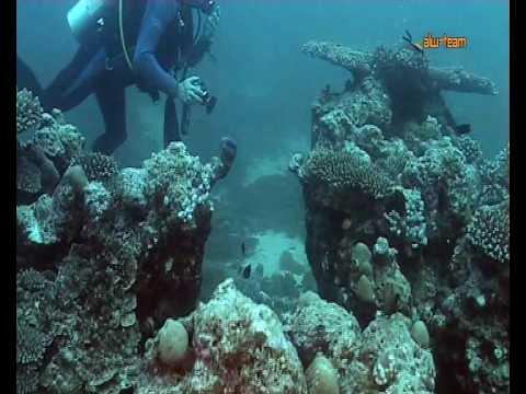Korallenlandschaften auf den Malediven, Summer Island (Village),Nord-Male Atoll,Malediven