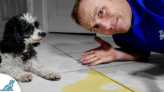 5 Puppy House Training Tips Every Puppy Owner NEEDS To Know