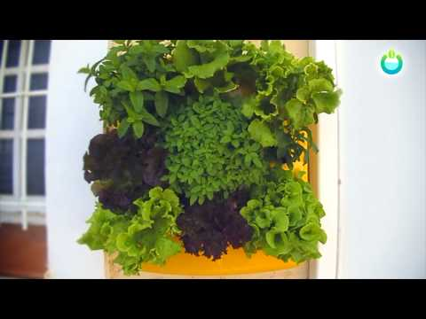 Videos from Optimus Garden
