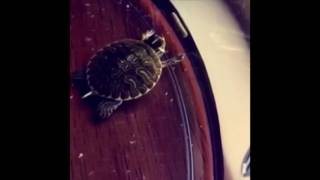 Turtle Hits The Hardest Dab Of 2016