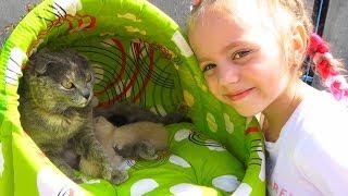 Наша КОШКА родила котят КАК НАЗВАТЬ little kittens ДОМИК для кошки и котят