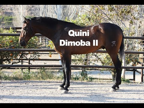 Quini Dimoba II (17-3-2019)
