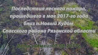 Сгоревший лес близ п.Новый Кудом Спасского района Рязанской области