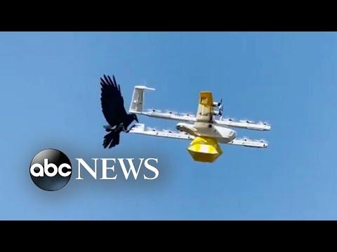 Κοράκι επιτίθεται σε drone