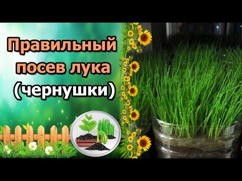 ПРАВИЛЬНЫЙ ПОСЕВ ЛУКА НА РАССАДУ! Лук из семян за один сезон.