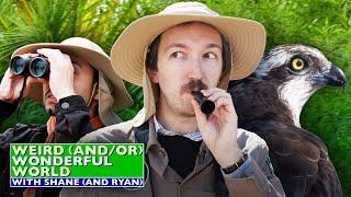 Shane & Ryan Go Birdwatching • Weird Wonderful World