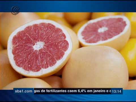 Embrapa recomenda cultivo de pomelo no Semiárido