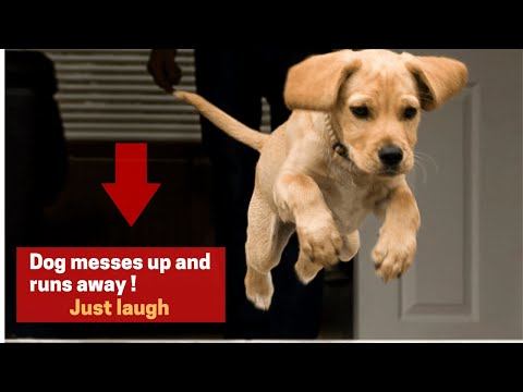 Try Not To Laugh With Pets - Funny Moments