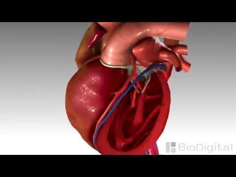 O diagnóstico de síndrome de hipertensão portal e tratamento