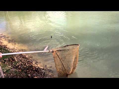 Pesca di grandi pesci di acqua dolce