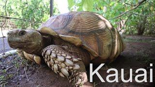 (Our First Days On) The Island Of Kauai, Hawaii