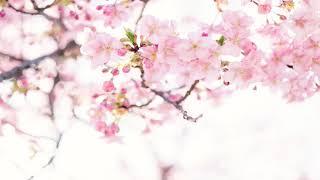 Zen Meditation Music For Sleep, Zen Garden Meditation Music, SPA music Vol 15