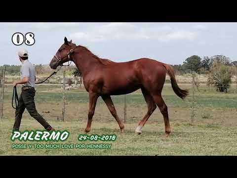 Lote PALERMO