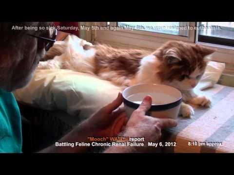 Video Feline Chronic Renal/Kidney Failure --Dehydration Crash. Facing Euthanasia --The Cat Came Back!