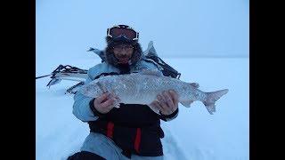 Подледная рыбалка на нельму
