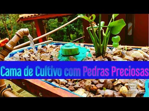 , title : 'Aquaponia 🐟 Cama de Cultivo com Pedras do Rio e Sifão Bell🐟 Passo a Passo Criação de Peixes 🐟
