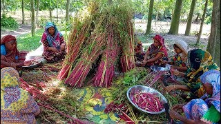 Amaranth Stick Curry - Traditional Data Chorchori Cooking For Whole Village people
