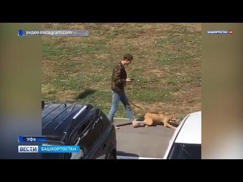 «Это не человек»: уфимцы требуют наказать мужчину за жестокое обращение с собакой