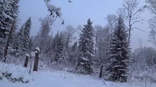 За чагой и веточками смородины в зимний лес