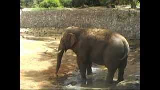 preview picture of video 'Safari Park - Ramat Gan'