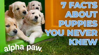 7 Surprising Facts About Puppies