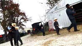 Amish Chicken Auction