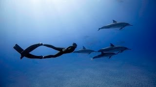 Freediving with Dolphins