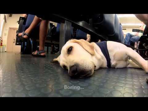 עולמם התזזיתי של כלבי הנחייה