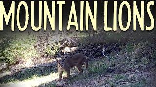 Mountain Lion Safety Tips