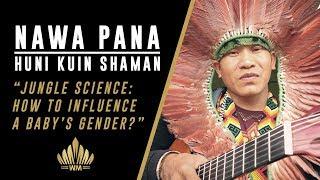 Jungle Science: How to influence baby's gender with Nawa Pana Huni Kuin