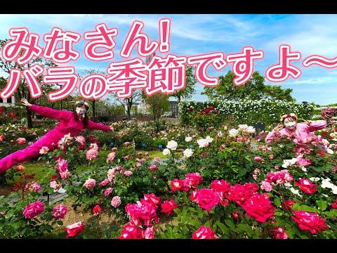 【ハウステンボス ユーチューブ課】街中がバラに囲まれています!