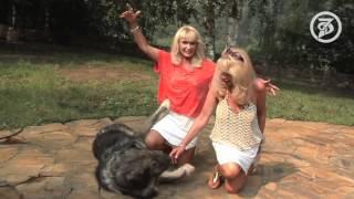 7Дней.ру - Собачий хор имени сестер Зайцевых