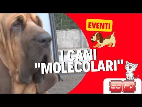CGTV - I cani Molecolari, i Professionisti del fiuto al lavoro