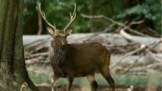 Fieldsports Britain – Oliver Edwards flyfishing and Paul Taylor on sika stalking