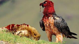 أخطر 10 طيور فى العالم |  أهرب فور رؤيتها