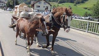 Alpabfahrt Alp Soll  28.8.2018