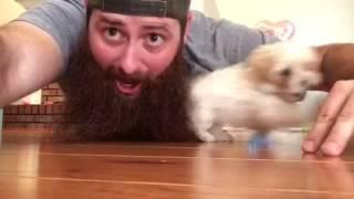 animale catelul ascuns in barba