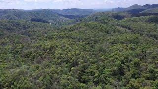 Việt Nam đặt mục tiêu tăng độ che phủ rừng toàn quốc lên tới 45%