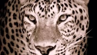 Snow Leopard Adaptations