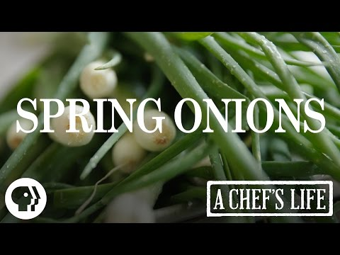 Spring Onions | A Chef's Life | PBS Food