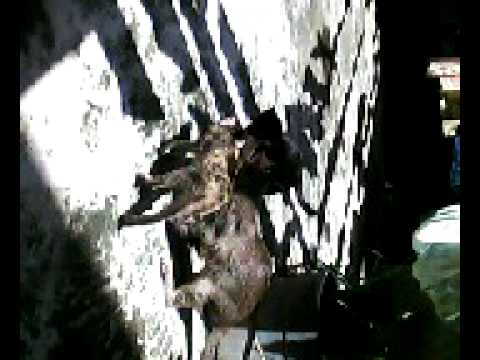 Cats Caught Fighting