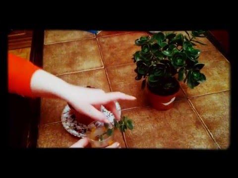 Leczenie zapalenia gruczołu krokowego ihtiolkoy