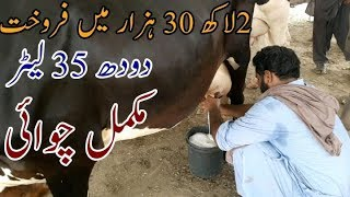 Janwar Mandi - Kênh video giải trí dành cho thiếu nhi