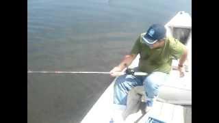 preview picture of video 'Tucunaré paca de 3,5kg - pescador Marcelino da Constroi'