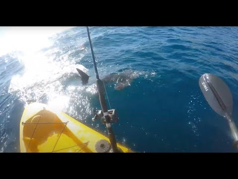 Kayak fisherman fights off aggresive hammerhead shark!!! (full video)