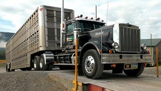 Hauling Pigs in a 1975 Autocar | Ride Along